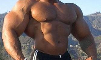Рост мышечной массы. Как и почему растут мышцы?